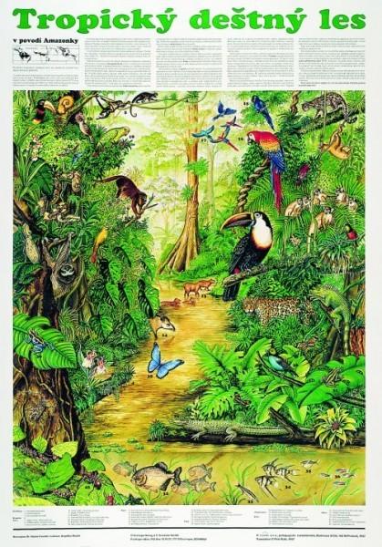 Tropický deštný les (nástěnná tabule)