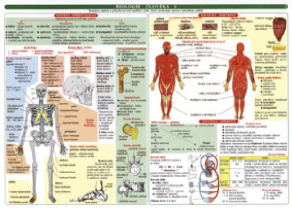 Biologie člověka (soubor 2 tabulek)
