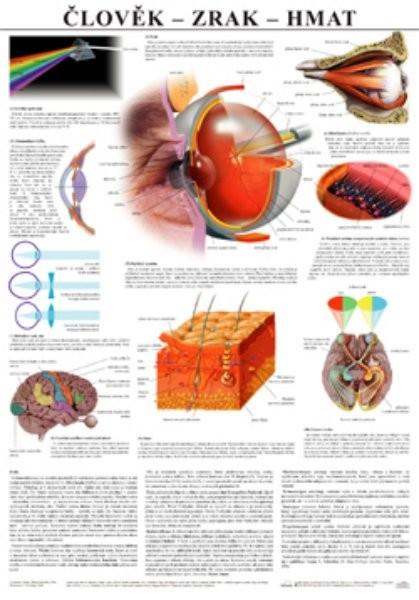 Člověk - zrak, hmat (nástěnná tabule)