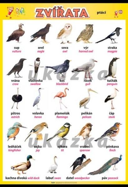 Zvířata - ptáci (nástěnná tabule 100x70 cm)