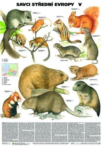 Savci střední Evropy V. (nástěnná tabule)