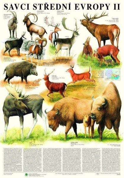 Savci střední Evropy II. - Sudokopytníci (nástěnná tabule)